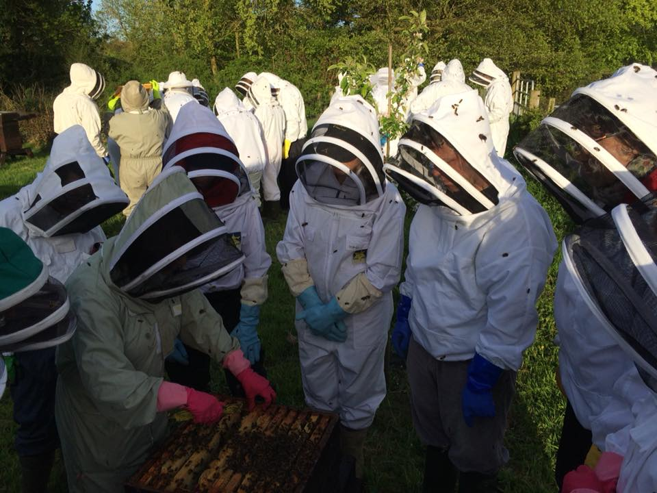 Apiary Demonstration